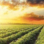 Mezőgazdaság - Erdészet